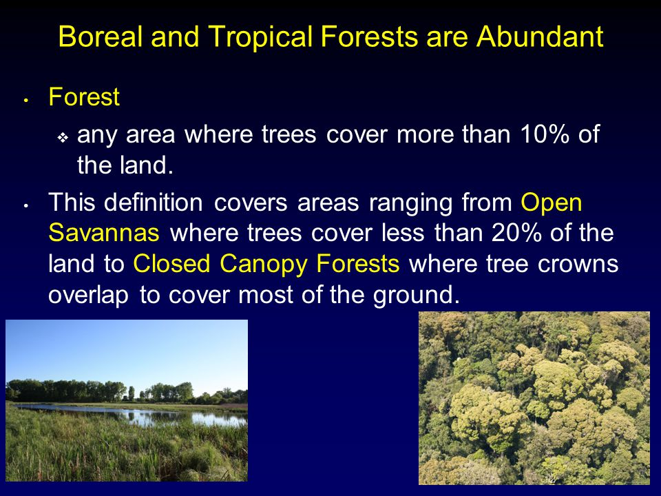 Boreal and Tropical Forests are Abundant