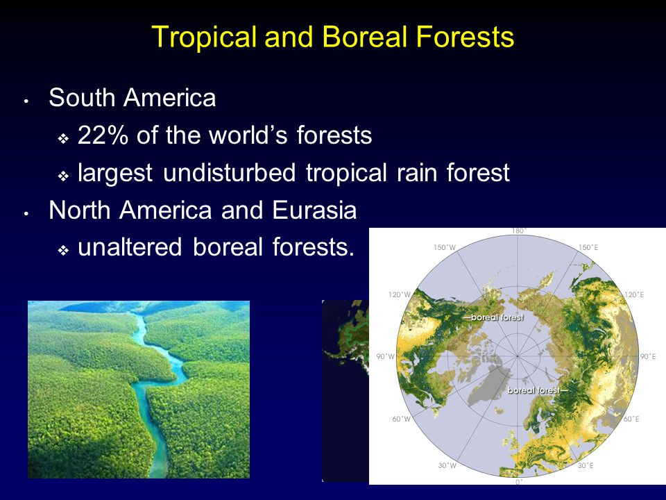 Tropical and Boreal Forests