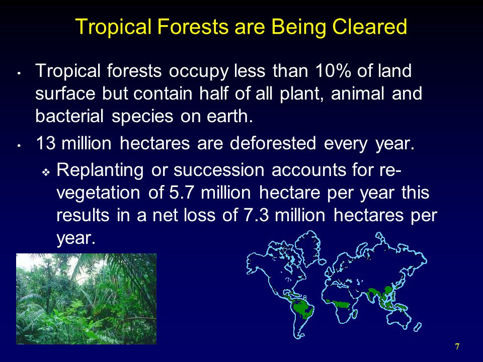 Tropical Forests are Being Cleared