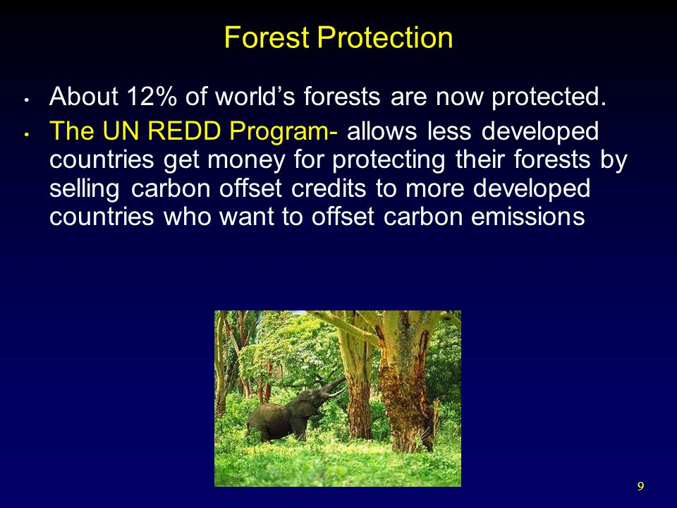 Forest Protection About 12% of world's forests are now protected.