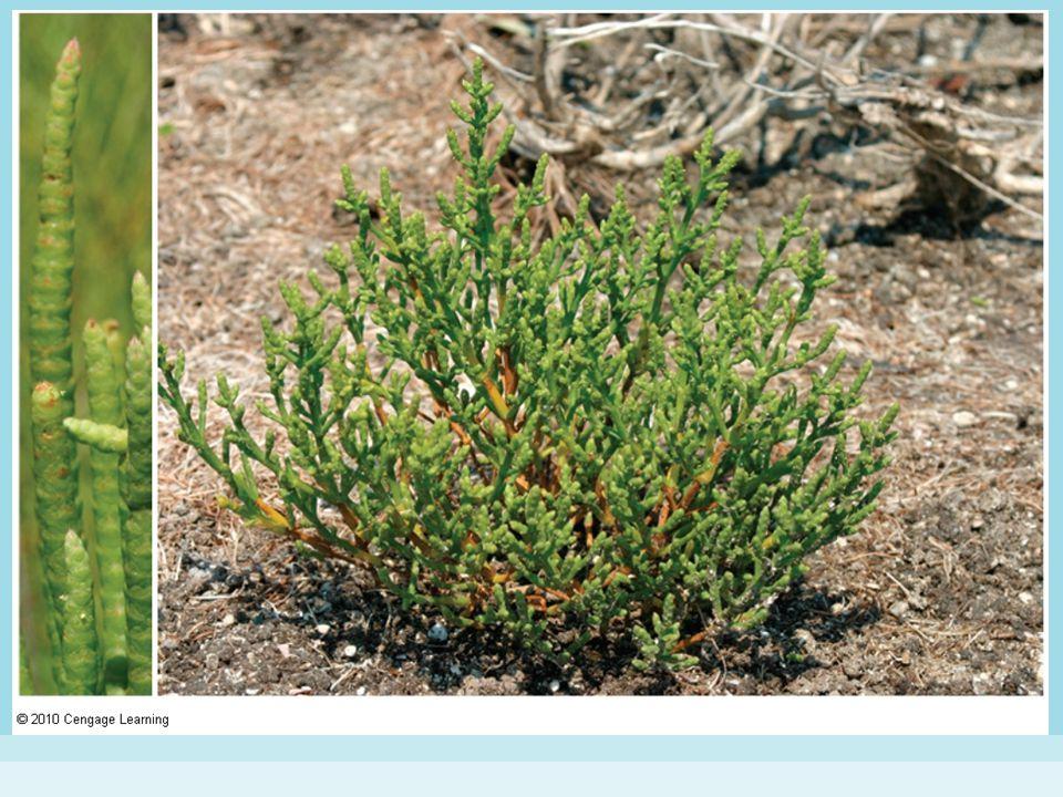 Key Concepts Multicellular marine macroalgae, or seaweeds ...