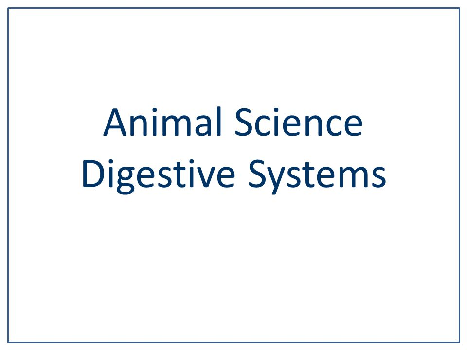 Animal Science Digestive Systems