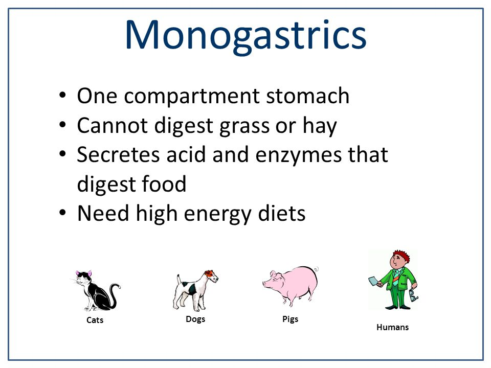 Monogastrics One compartment stomach Cannot digest grass or hay