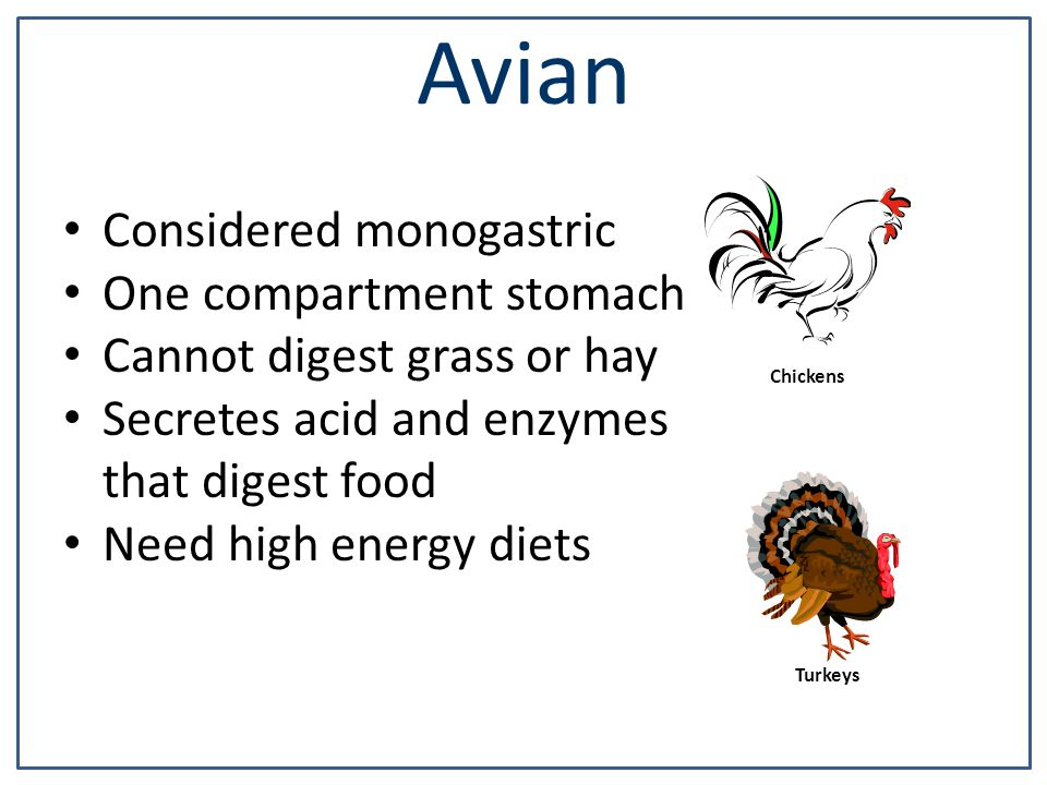Avian Considered monogastric One compartment stomach