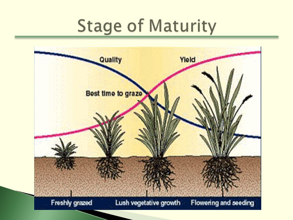 Forage Selection And Quality Ppt Video Online Download