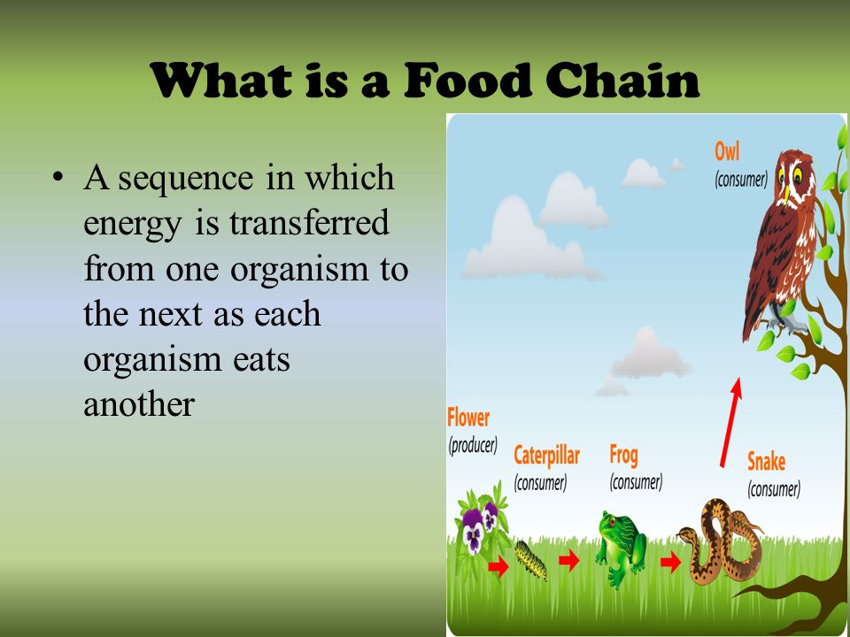 Organism Food Chain With Humans On Top