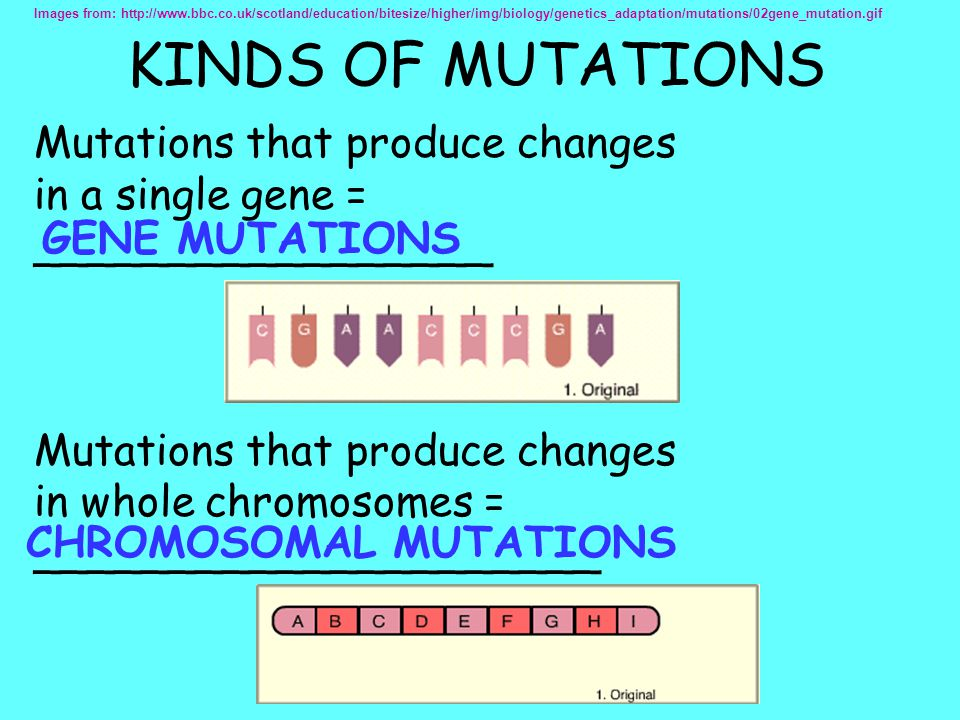 KINDS OF MUTATIONS Mutations that produce changes in a single gene =