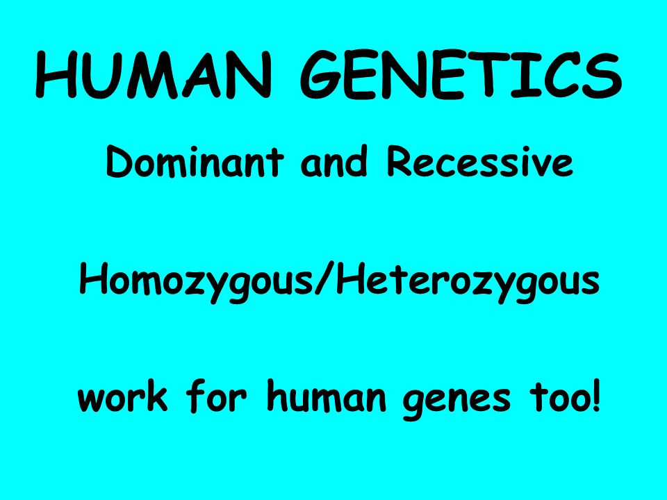 HUMAN GENETICS Dominant and Recessive Homozygous/Heterozygous