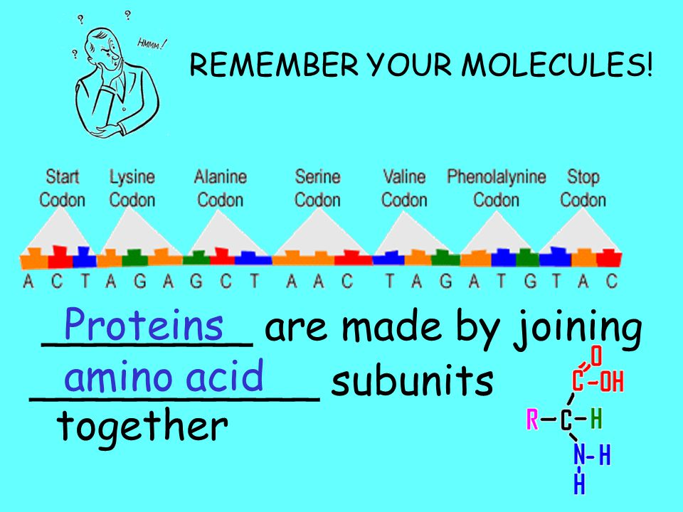 ________ are made by joining ___________ subunits together amino acid