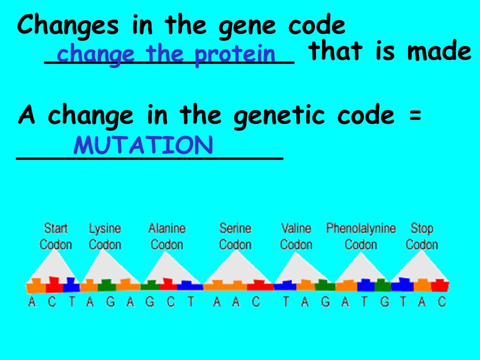 Changes in the gene code _______________ that is made