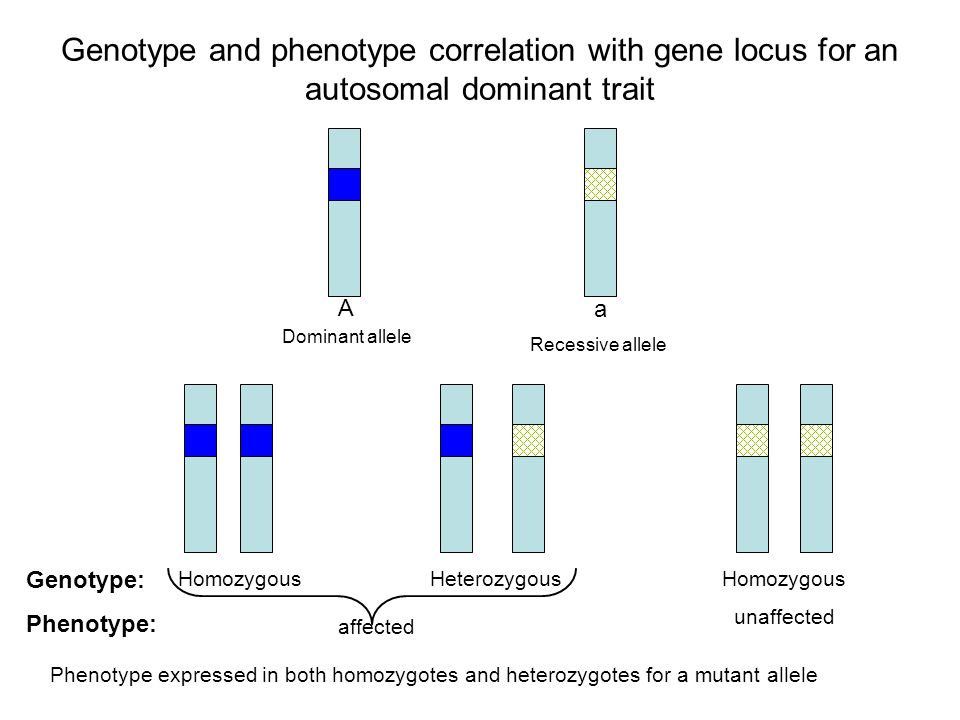 Genetic dominance genotype phenotype relationships dating. number of kannadigas in bangalore dating.