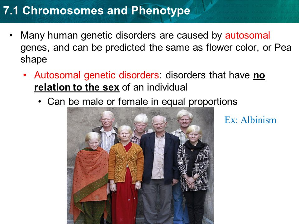 71 Chromosomes and Phenotype Autosomal Genetic Disorders ppt – Human Genetic Disorders Worksheet