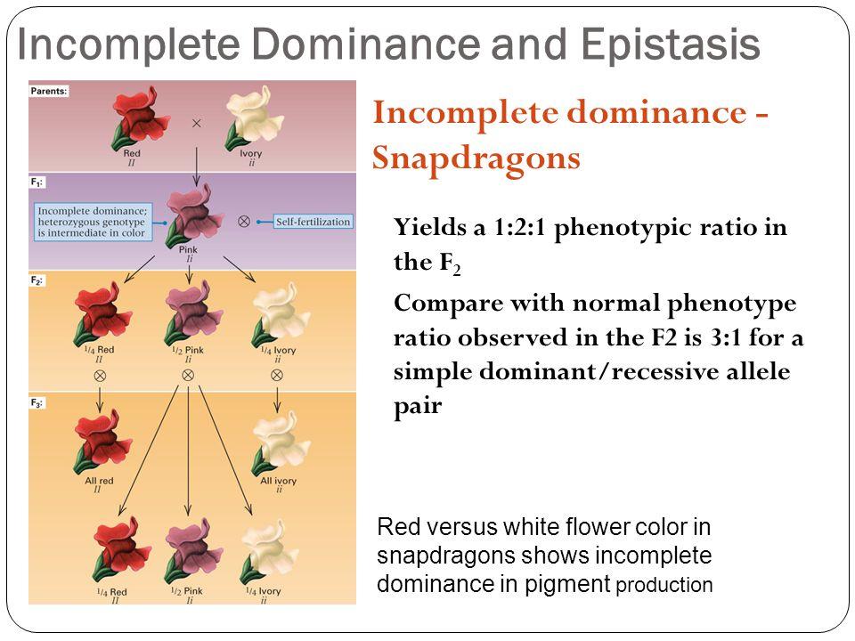 Top Five Phenotypic Ratio Of Incomplete Dominance - Circus