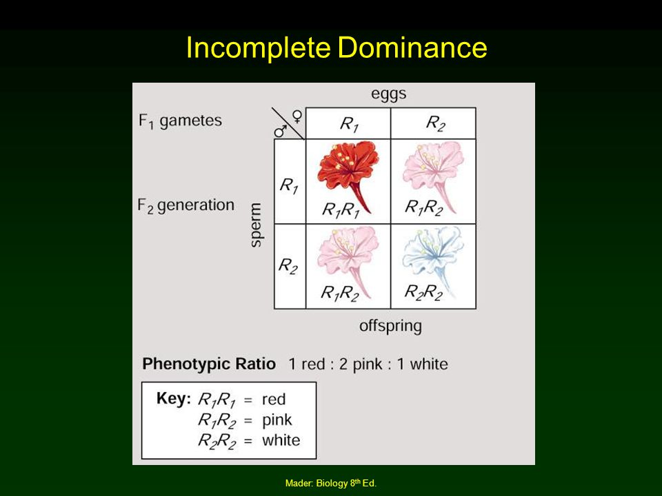 Incomplete Dominance Mader: Biology 8th Ed.
