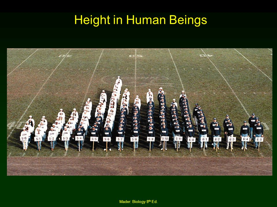 Height in Human Beings Mader: Biology 8th Ed.