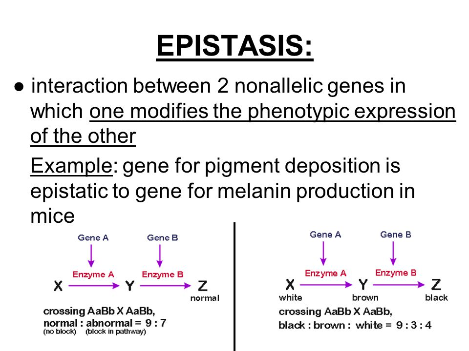 epistatic relationship between genes dna