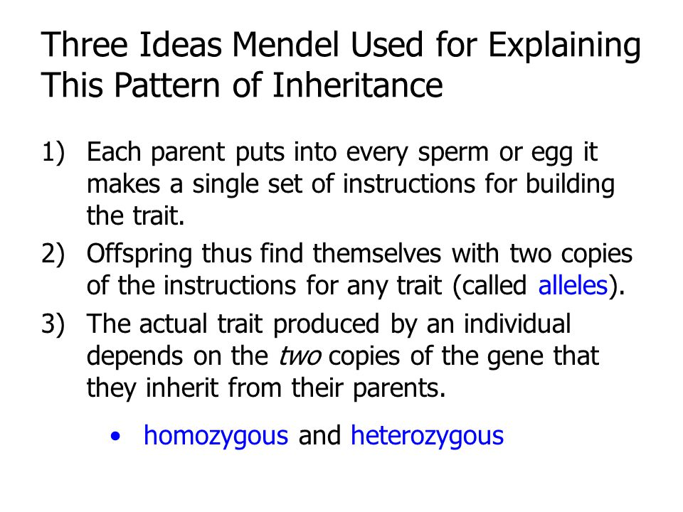 Three Ideas Mendel Used for Explaining This Pattern of Inheritance
