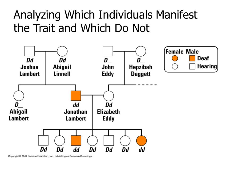 Analyzing Which Individuals Manifest the Trait and Which Do Not