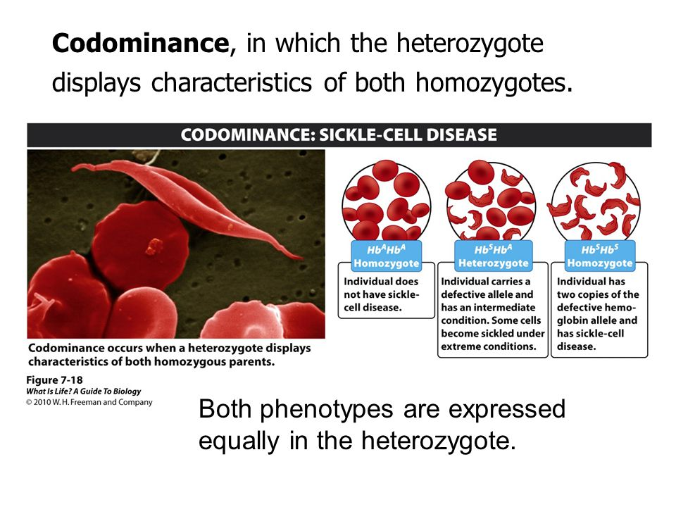 Both phenotypes are expressed equally in the heterozygote.