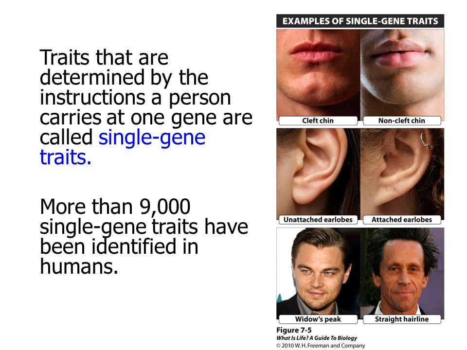 More than 9,000 single-gene traits have been identified in humans.