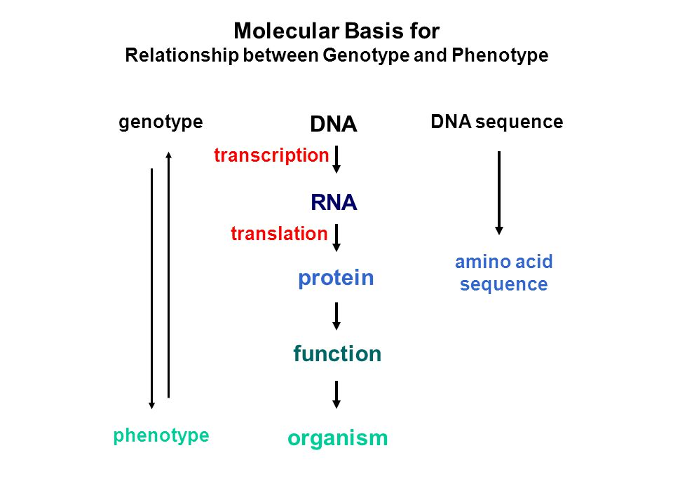 relationship between genes dna and polypeptides in food