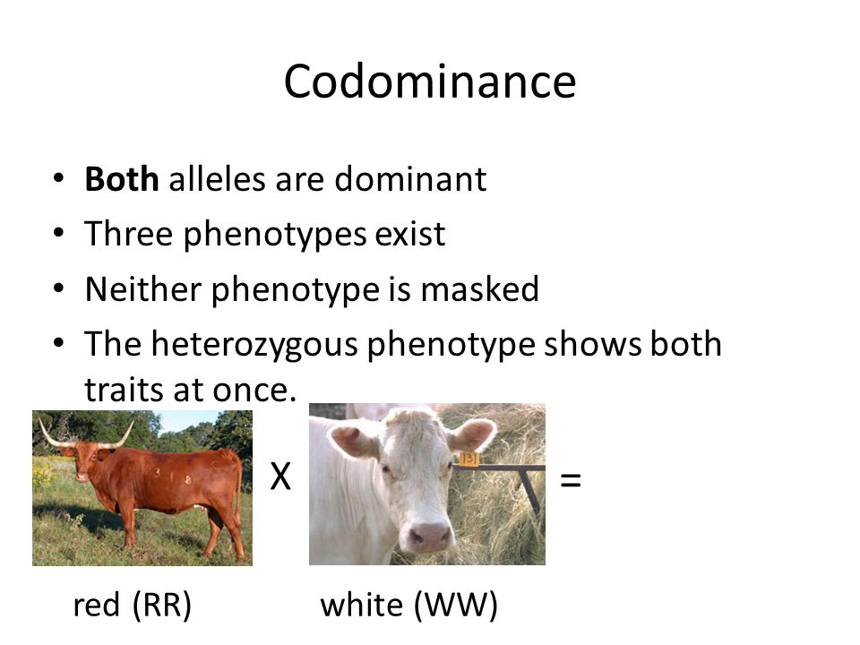 Codominance = X Both alleles are dominant Three phenotypes exist