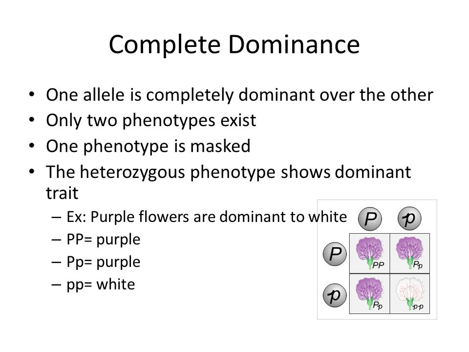 Complete Dominance One allele is completely dominant over the other