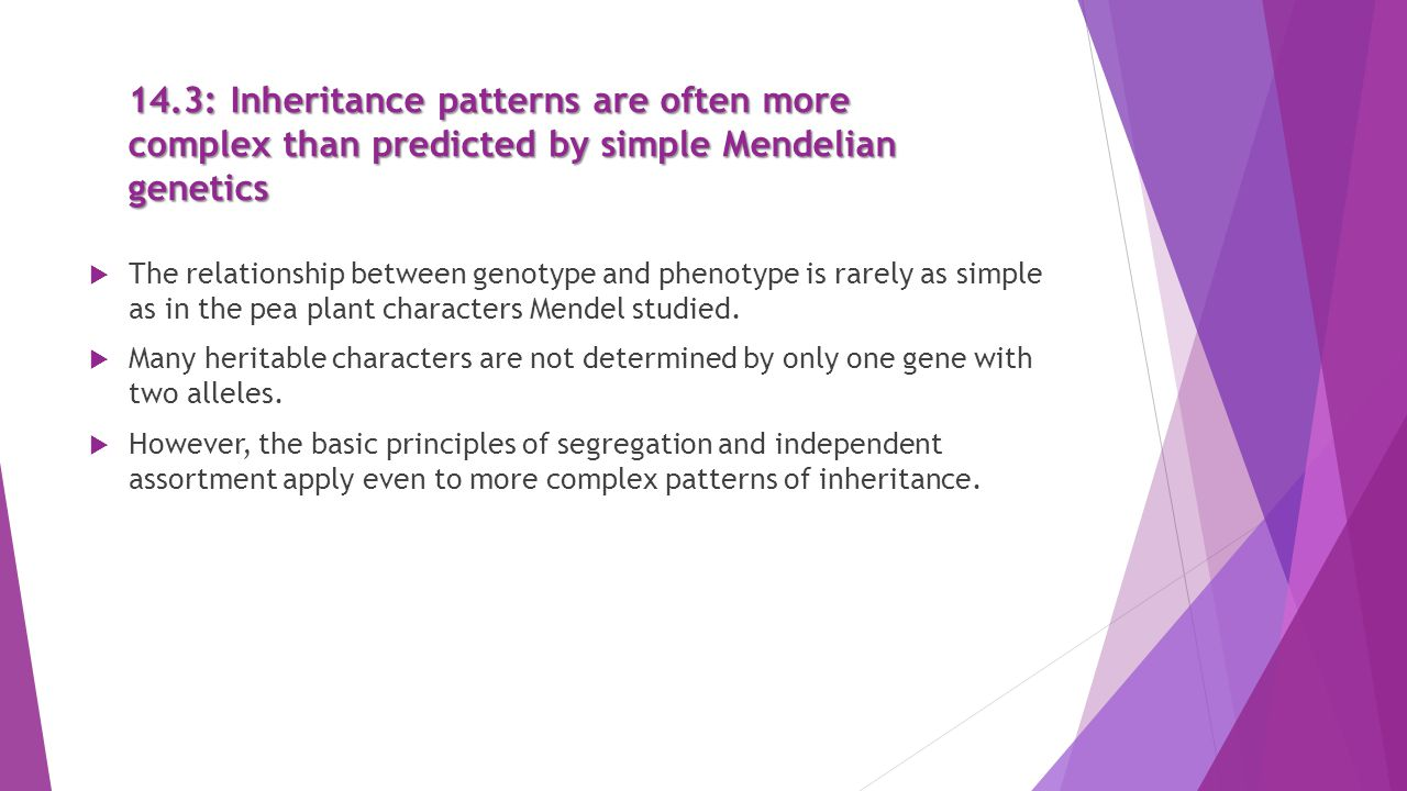 the relationship between the genotype and The genotype–phenotype distinction is drawn in genetics genotype is an organism's full hereditary information phenotype is an organism's actual observed properties, such as morphology, development, or behavior this distinction is fundamental in the study of inheritance of traits and their evolution.