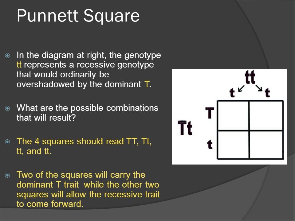 Punnett Square In the diagram at right, the genotype tt represents a recessive genotype that would ordinarily be overshadowed by the dominant T.
