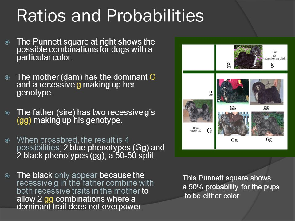 Ratios and Probabilities