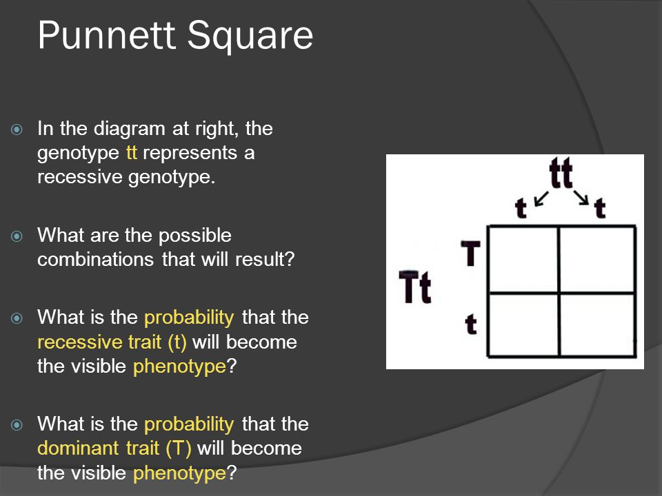Punnett Square In the diagram at right, the genotype tt represents a recessive genotype. What are the possible combinations that will result