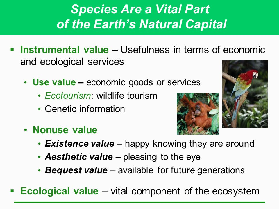 Species Are a Vital Part of the Earth's Natural Capital