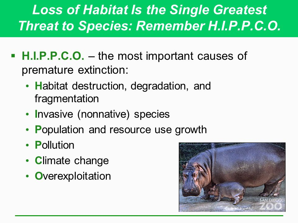 Loss of Habitat Is the Single Greatest Threat to Species: Remember H.I.P.P.C.O.