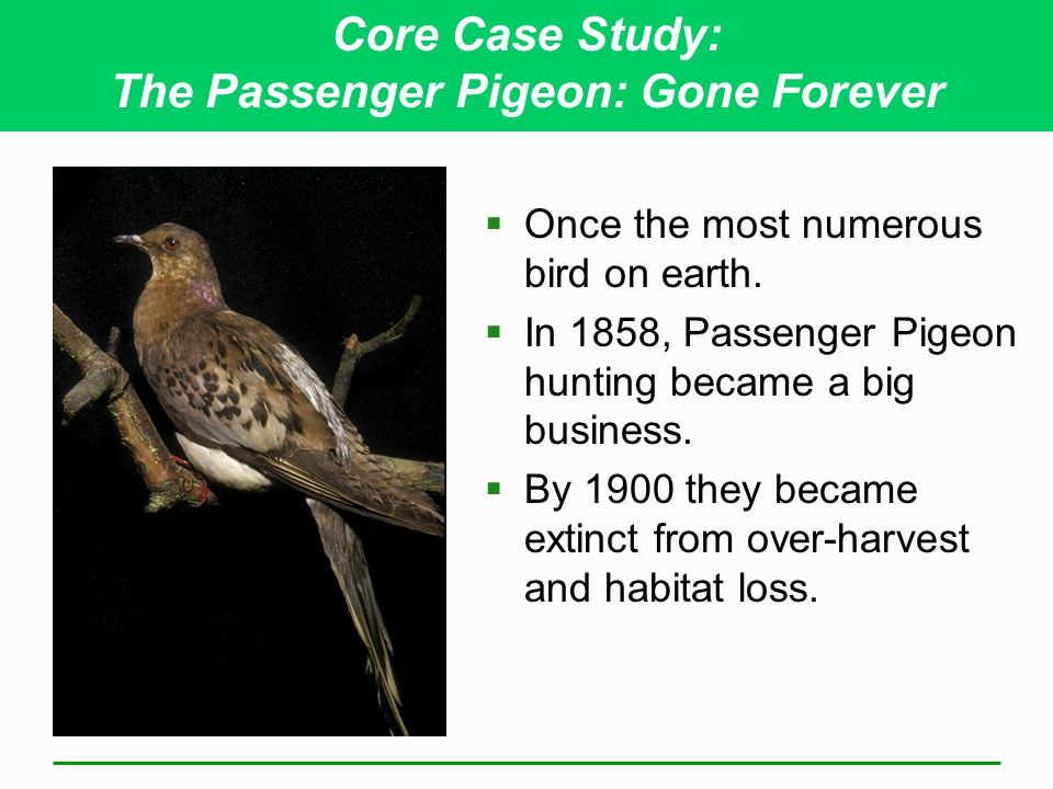 Core Case Study: The Passenger Pigeon: Gone Forever