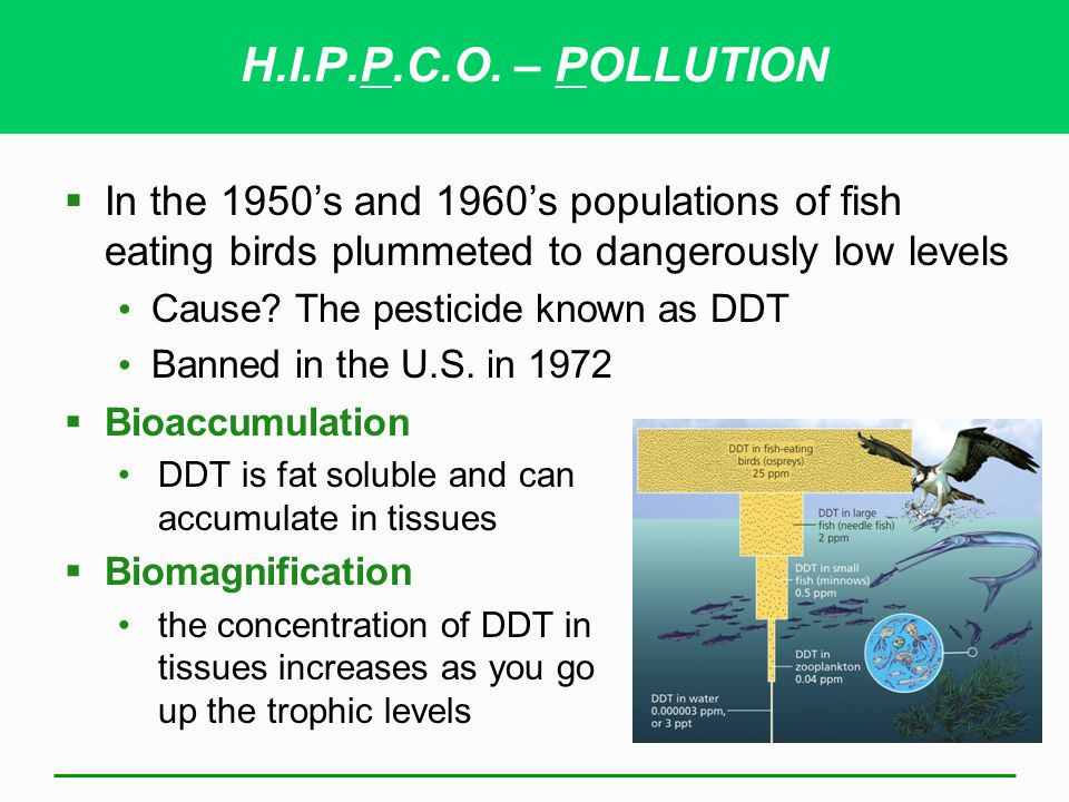 H.I.P.P.C.O. – POLLUTION In the 1950's and 1960's populations of fish eating birds plummeted to dangerously low levels.