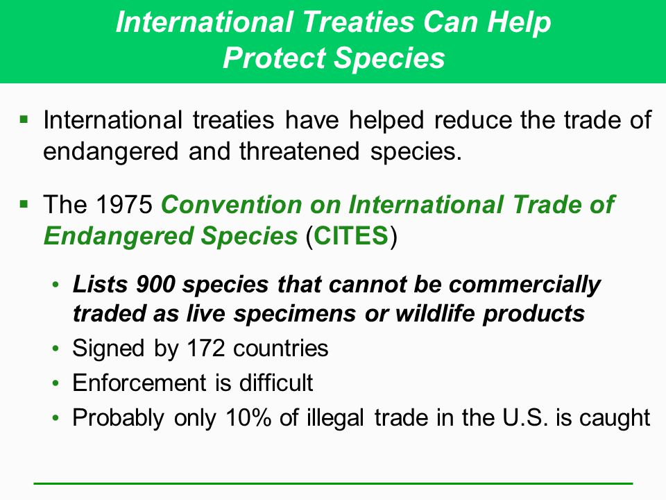 International Treaties Can Help Protect Species