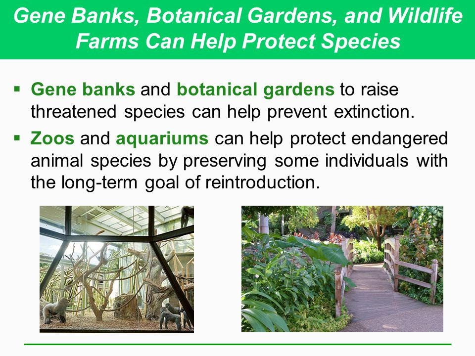 Gene Banks, Botanical Gardens, and Wildlife Farms Can Help Protect Species