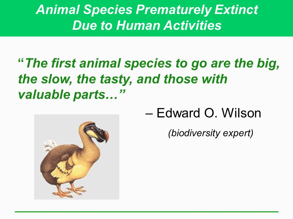 Animal Species Prematurely Extinct Due to Human Activities