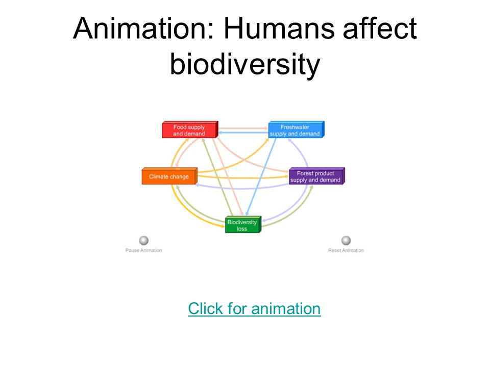how the plantation affect biodiversity Plantation forests, climate change and biodiversity  biodiversity in plantation forests will be the product of an  may affect biodiversity in plantation.