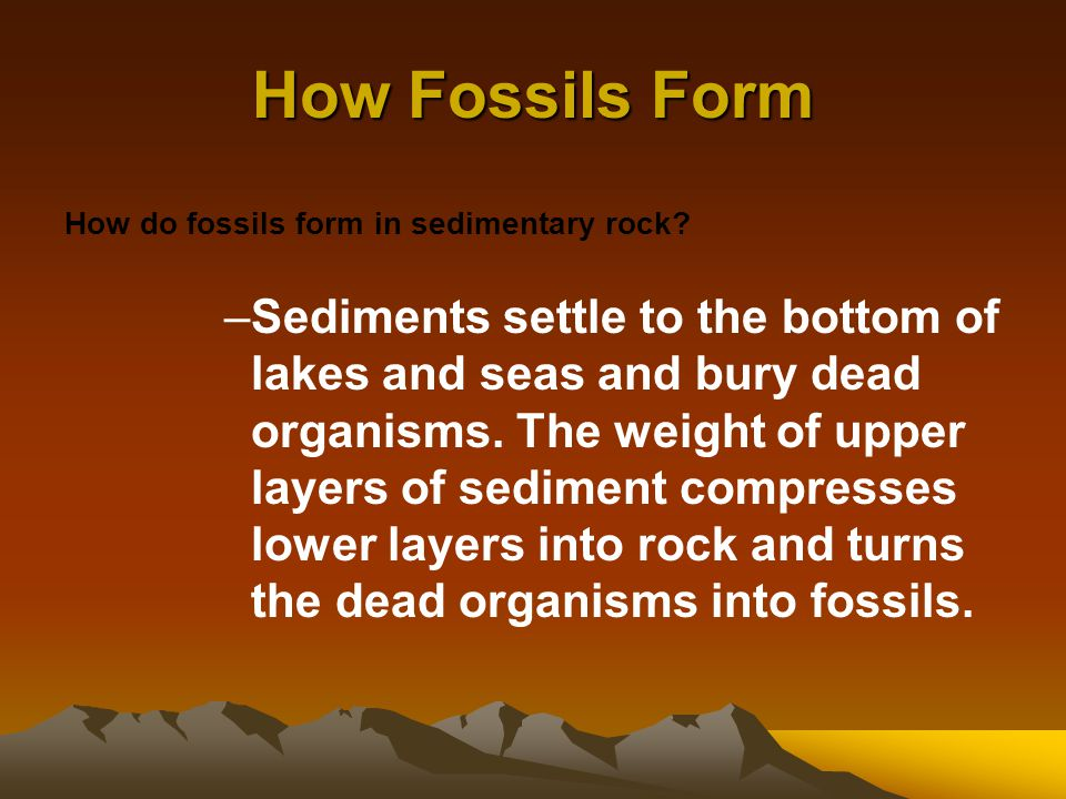 The Fossil Record Section 17–1 - ppt video online download