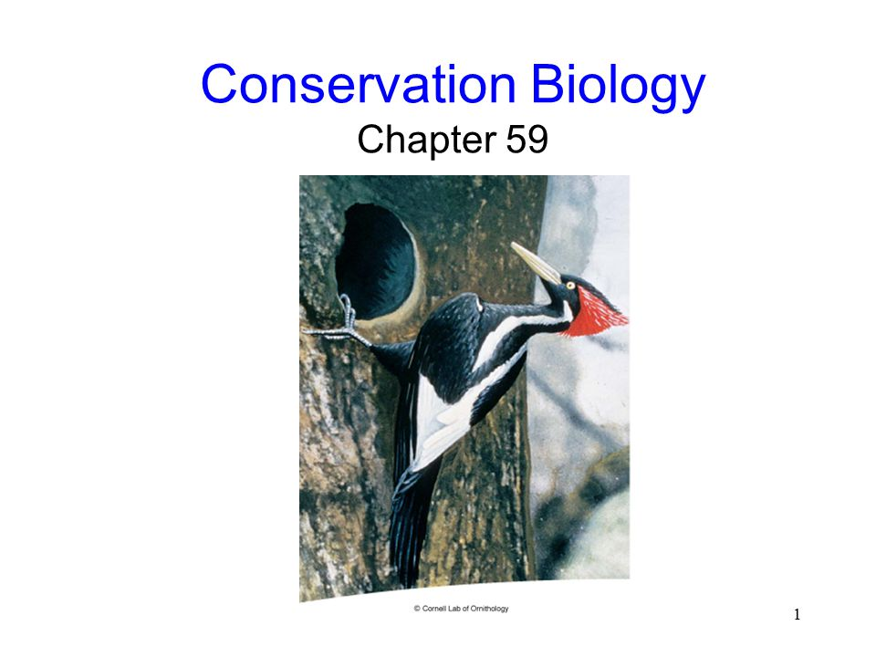 conservation biology How to write and publish a scientific paper in the field of marine ecology and conservation view all articles 2018 society for conservation biology.