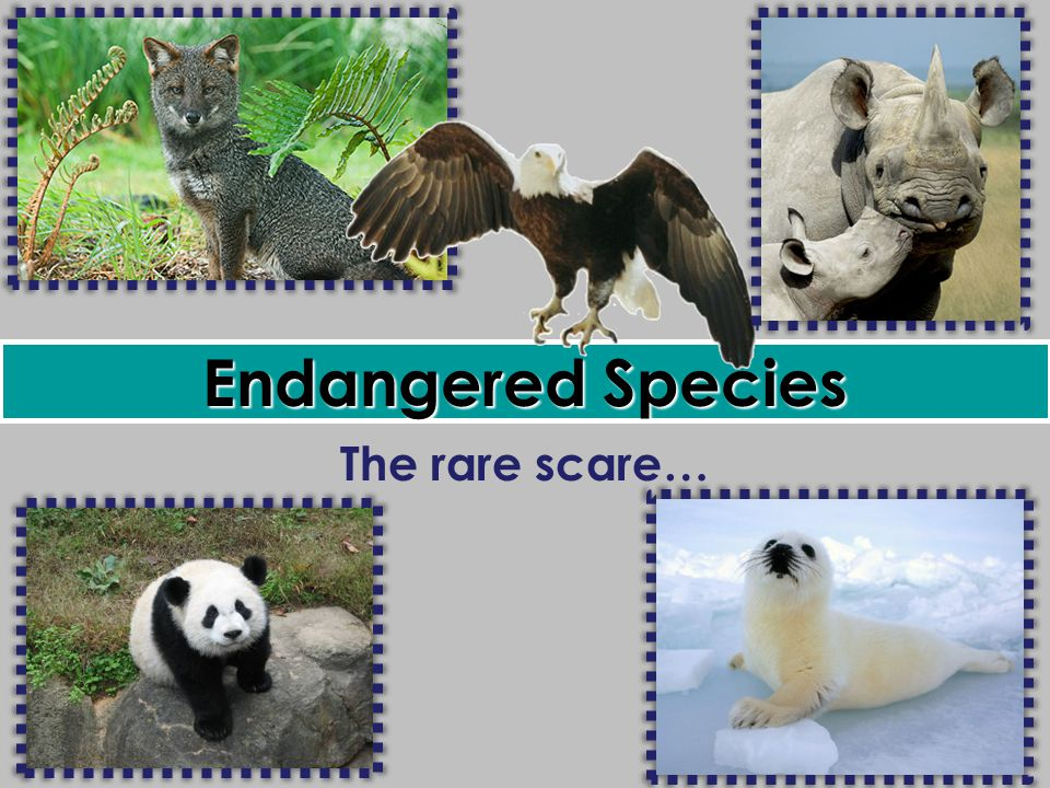 "should endangered species be preserved all ""why save endangered species why should we endangered and threatened species of wildlife and plants ""are of esthetic, ecological, educational."