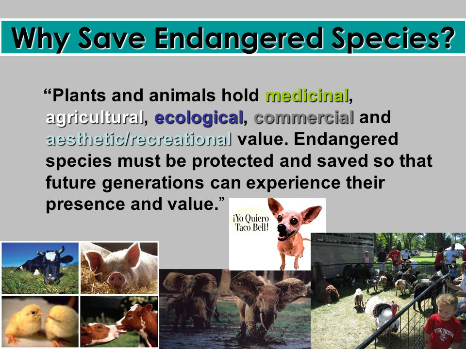 endangered animals should be protect essay Endangered means to be under threat or near extinction when a species/animal  is endangered it means that they are disappearing fast or have a very small.