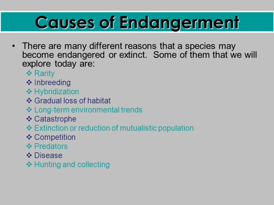 What Causes Extinction?