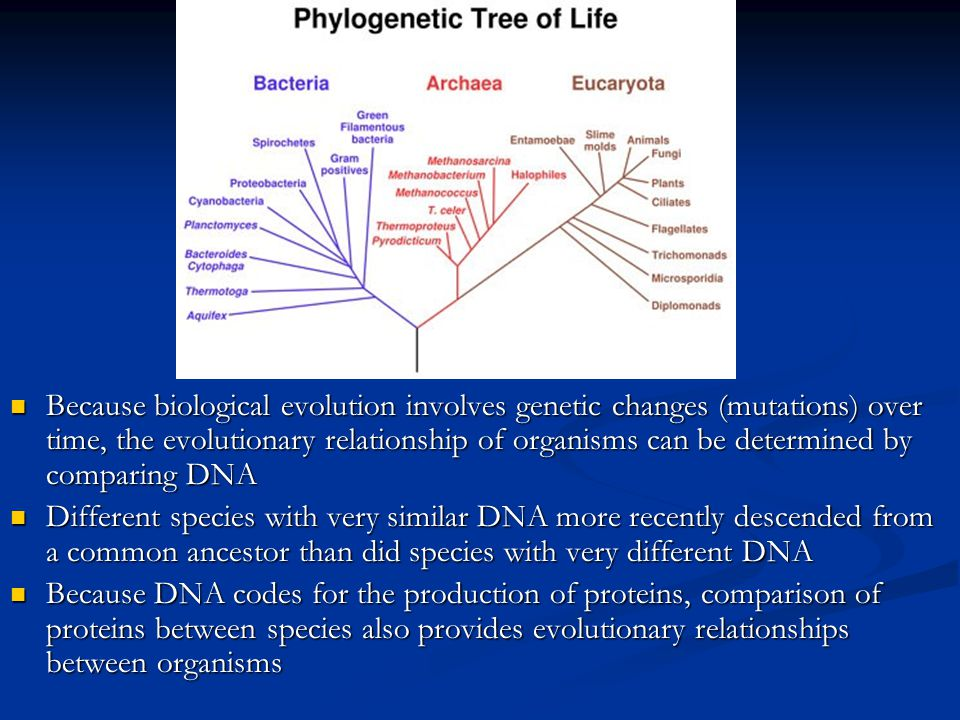 what is an evolutionary relationship
