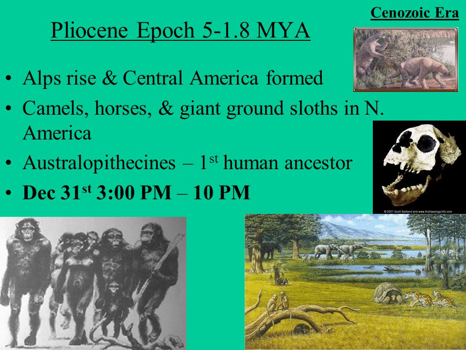pliocene epoch Oligocene, miocene, and pliocene epoch, a timeline made with timetoast's free interactive timeline making software.