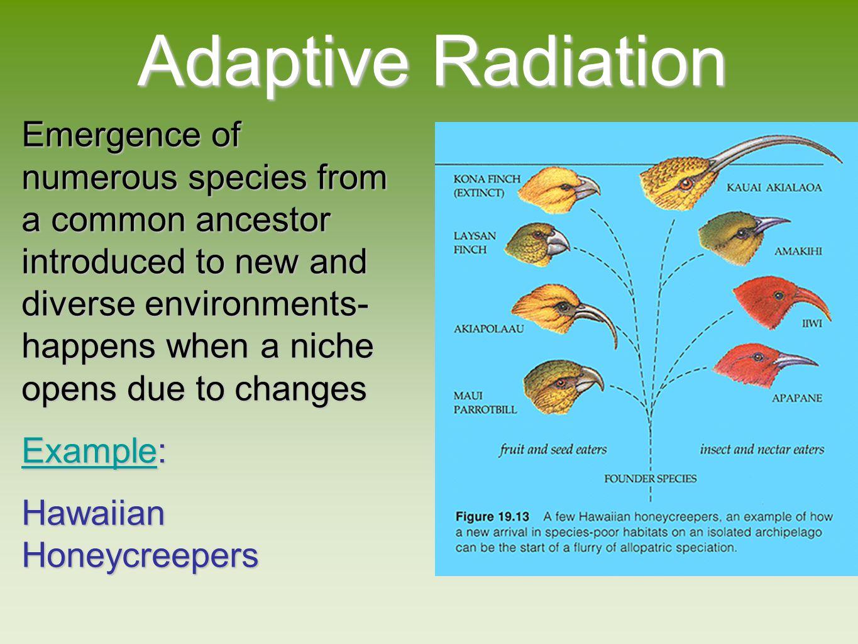 evolution of biodiversity ppt download