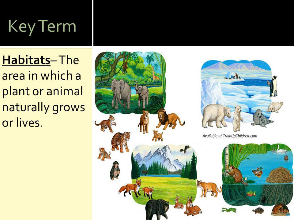 Key Term Habitats– The area in which a plant or animal naturally grows or lives.