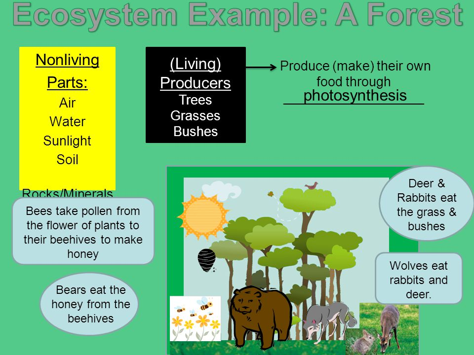 Ecosystems Ppt Video Online Download