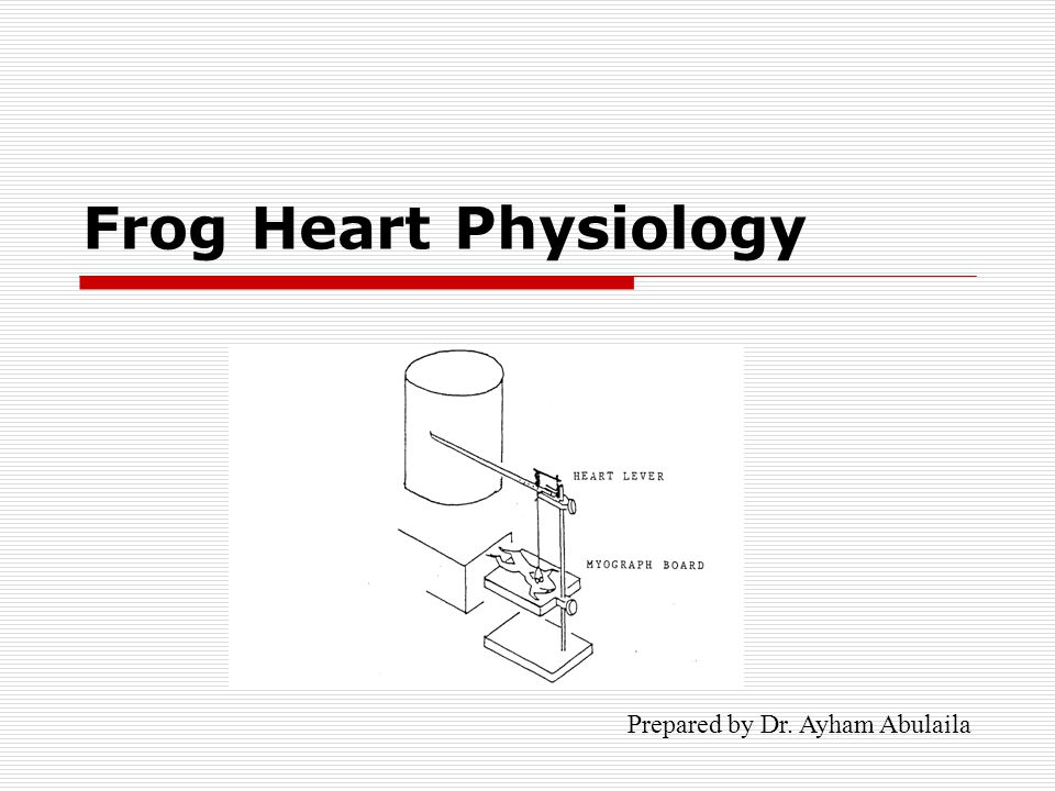 Body Fluids and Circulation - Heart - Amphibians - YouTube
